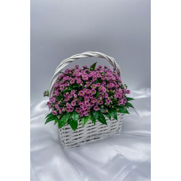 Royal | Flower Basket